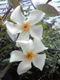 花日記と写真のブログ