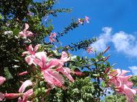 ハワイの花(*'ω'*)