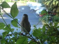 ハワイの鳥o(^o^)o