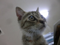 会社で子猫を保護(*'ω'*)