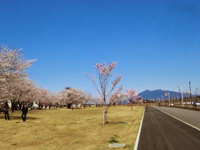 筑波山と桜♪