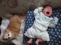 息子ちゃん・・・犬は苦手ですか(^o^;)?