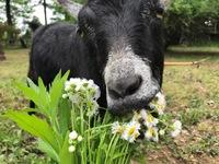 花束を君に、、、