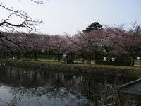 山形の桜&つくばベンチャー花見のお知らせ