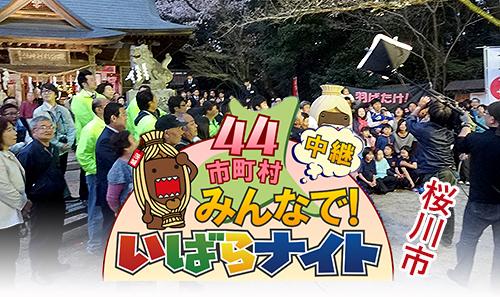 2014「桜川のサクラ」…NHK『今夜はいばらナイト』放送無事終了!!