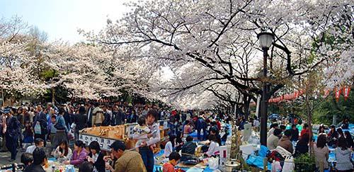 飲んで食べての「花見」をするのは日本だけって知ってました?