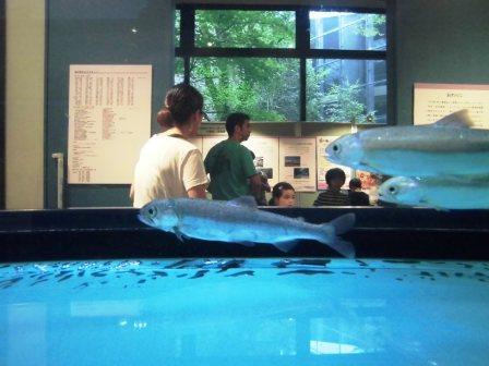 自然博物館の企画展「ぎょ・魚・漁」に行ってきた!