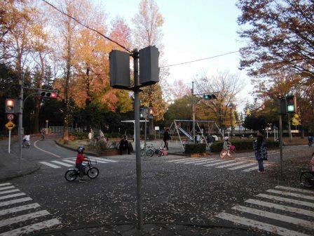 晩秋の「さくら交通公園」!