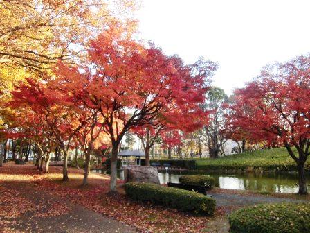 松見公園の紅葉!