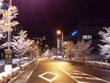 冬の研究学園 雪の並木道!