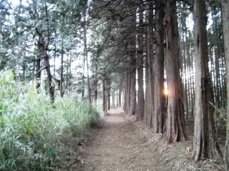 学園の森 大規模緑地に潜入調査!