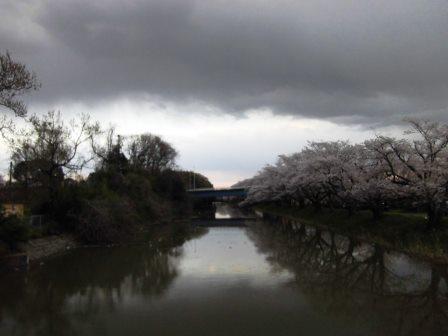 【2014年桜シリーズ】福岡堰さくらまつり!