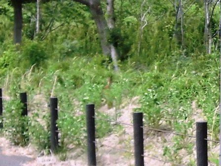 学園の森を脱兎のごとく駆け抜ける脱兎!