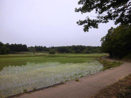 「高崎自然の森」の水辺の森!