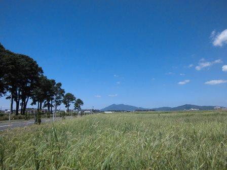 テーダ松並木と夏の筑波山!