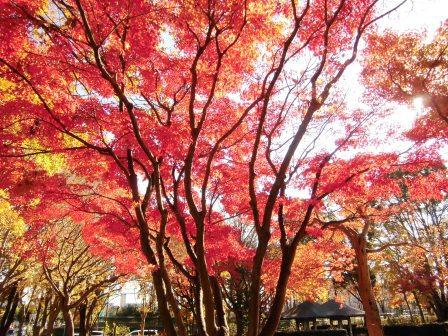 松見公園の紅葉がきれい!