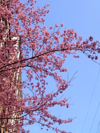 2015年、研究学園にも春が来た!