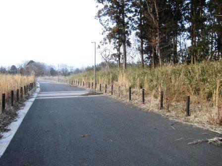 平塚の森沿いの散歩道でウグイスの声を聴く!