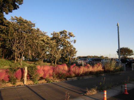 研究学園の秋の風景!