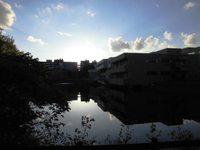 筑波大の松美上池にスワンボートを発見!