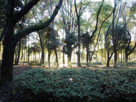 秋の夕方の洞峰公園!