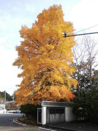 筑波実験植物園の秋の風景!
