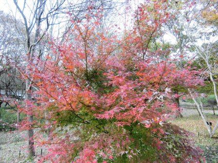 筑波大の中にも植物園があった!