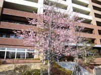 2016年 研究学園に春がやってきた!