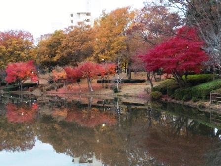 どこかの谷川?いえいえ、つくば市内の公園です!