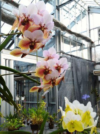 筑波実験植物園の「つくば蘭展2016」に行ってきた!