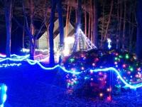 今年も「ゆかりの森」のイルミネーションがひっそりと行われてる!