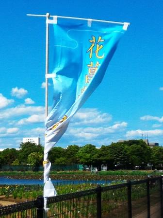 乙戸沼公園のあやめまつりに行ってきた!