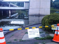 松見公園の鯉の大量死の原因が明らかに!