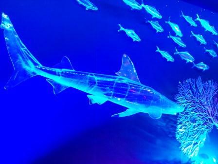 茨城県自然博物館の「サメ展」に行ってきた!
