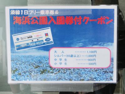 今週末もまだ見られます! 青の絨毯【ひたち海浜公園】への旅(前編)