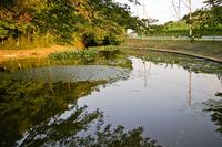 桜川 2011/11/29 15:15:00