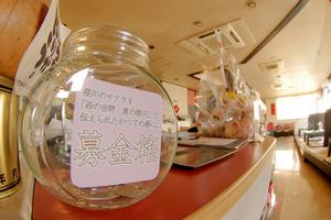 桜川のサクラ募金開始