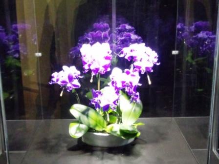 筑波実験植物園 つくば蘭展へ行ってきました!