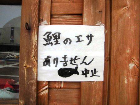 中央公園の池で鯉のえさやりが禁止に!