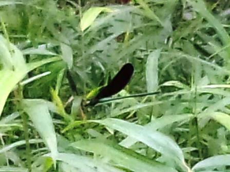 高崎自然の森で生き物観察!