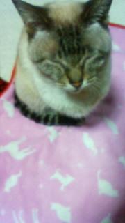 ミーコさんの。