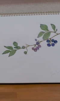 植物画 2012/04/13 12:16:05
