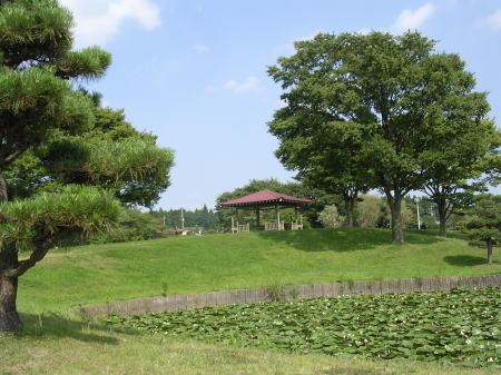 柏原公園 夏