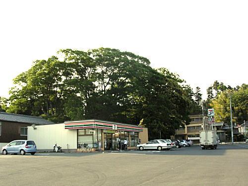 高浜神社のケヤキ