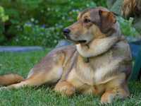 ダミー画像ジェネレーター「Placeholder DOGS」