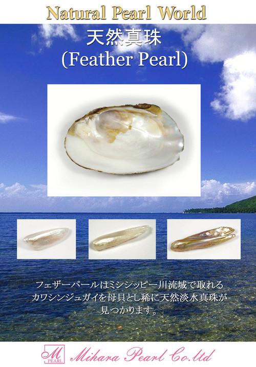 フェザーパール(ミシシッピ流域淡水真珠)☆天然真珠展
