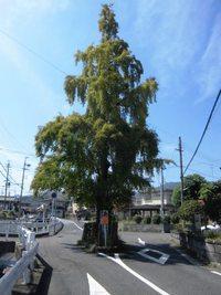 2015年関西旅行(12) 石山寺門前「洗心寮」で瀬田川を眺めながら昼食!