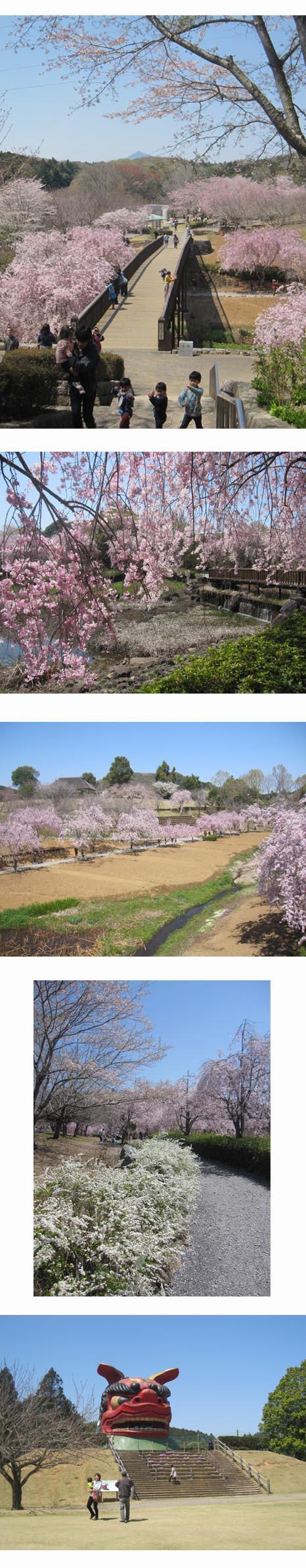 常陸・風土記の丘の桜
