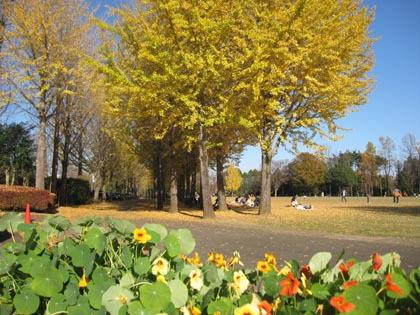 万博記念公園の秋