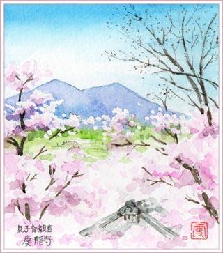 泉子育て観音・桜